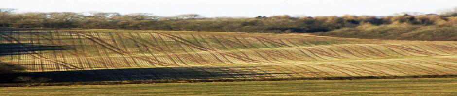 Field near Over Norton
