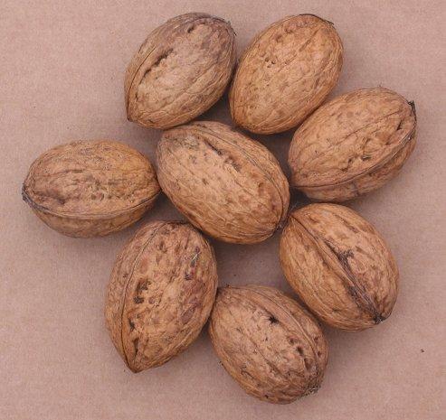 Broadview walnuts