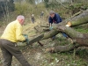 Sawing up a fallen perimeter tree in April 2013