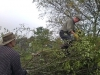 201410-2 Hedgelaying Oct 2014 - an overview