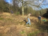 20130125-2 Hook Norton - opening up space for butterfly colonies